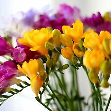 Freesia Fragrance Oil Candle/Soap Making, Oil Burners, Diffusers