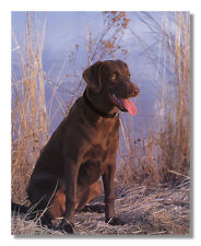 Chocolate Labrador Puppy Dog in Tall Grass Photo Wall
