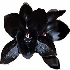 BLACK ORCHIDS & VANILLA Fragrance Oil Candle/Soap Making,Bath & Body