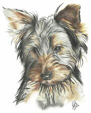 Yorkshire Terrier dog pencil art drawing A4 print or greeting / birthday card
