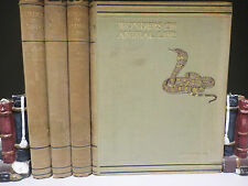 Hammerton - Wonders Of Animal Life - 4 Books Collection! (ID:46011)