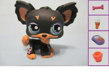 LITTLEST PET SHOP DOG CHIHUAHUA BLACK #1571 + 1 FREE Accessory Authentic