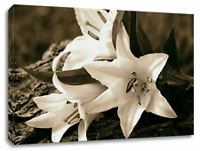 LILIES LILY Framed Canvas Picture Flowers Framed Art Print