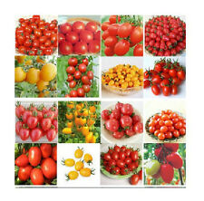 1 Bag 20 seeds Various 15 Kinds Of Potted Plant Seeds Pack Green Vegetable Seeds