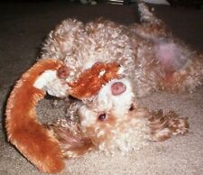 SKINNEEEZ Skinneez No Stuffing Dog Toy A lot of animals to pick from