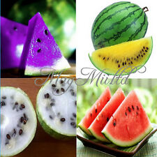 10 PCS 2 Kinds Rare Sweet Watermelon Seeds Fruit Seed Hot Sales