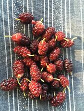 YOU CHOOSE- Fruiting Plant/Tree Seeds