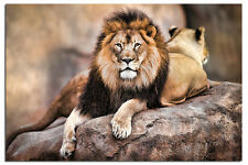 King Of The Pride Lion Poster New - Maxi Size 36 x 24 Inch