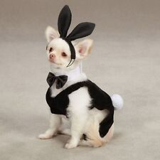 Casual Canine Party Hounds Bunny Halloween Dog Costume Black w/ Bunny Ears