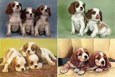 Vintage Dog Postcards - Spaniel Puppies - Postcards Unused/Unposted
