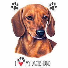 Dachshund Love Dress Nightshirt Coverup Pick Your Size