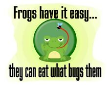 Custom Made T Shirt Frogs Easy Can Eat What Bugs Them Cute Frog Fly Humor Funny