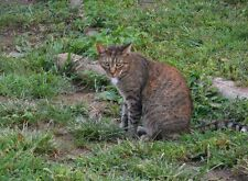 Cat In Nature) Nature Scenery Home Poster Photography print ORIGINAL WALL ART