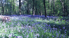 Bluebell Woods Country Landscape Canvas Pictures Wall Artwork Prints All Sizes