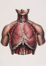 ML10 Vintage 1800's Medical Human Chest & Lungs Surgical Poster RePrint A2/A3/A4