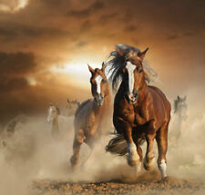 Modern Home Art wall Decor Animals Horse Oil painting Picture Printed on canvas