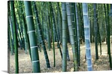 Bamboo Tree Forest, Close Up Canvas Wall Art Print, Tree Home Decor