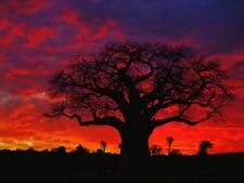 african baobab tree travel sunset unique LIGHT SWITCH PLATE home decor