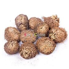 1/5/10X Resurrection Plant Rose of Jericho Dinosaur Plant Air Fern Selaginella