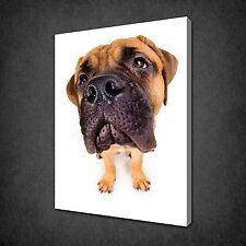 BULLMASTIFF PUPPY DOG ANIMAL CANVAS PRINT PICTURE WALL ART POSTER FREE UK P&P