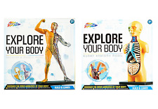 EXPLORE YOUR BODY HUMAN ANATOMY MODEL KIT BUILD & LEARN SKELETON & MUSCLE RMS