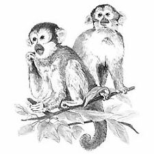 "Monkeys - Sketching Made Easy Kit 9""X12"""