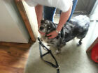 Carter Pet Supply Hand Made Step In Dog Harness USA Made Easy Fit Large