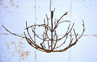 Wrought Iron Hanging Branch Tree  Metal Limbs