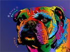 Bulldog Bull Dog Pop Art Print Poster - s132