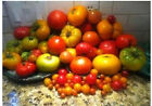 Choose your own Tomato Variety Seeds from 100 Diff types!! Plus Bonus Seeds!