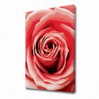 0063 LARGE PINK ROSE CANVAS PRINT