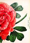 Vintage Botanical Posters, Antique Floral Prints, A3 A4 Plants Wall Art Print <br/> BUY2 GET1 FREE * KITCHEN, RESTAURANT CHRISTMAS GIFTS