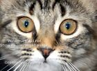 Cats Eyes Photographic wall art ,Photo, picture, poster,all sizes