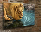 Large Canvas Wall Art Picture Print Abstract Lion Drinking From Pool JY45