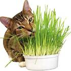 450g 100% Pure Natural Oat Grass Seeds Cat Rabbit Pet  12000 + seeds