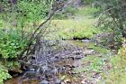 Montana Gold Mine 20 ac Dredge Placer Claim on French Creek Beaverhead, Dillon