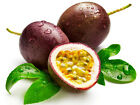 10 passion fruit seeds Passiflora edulis purple granadilla Edible Tropic I74