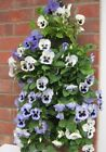 Hessian Flower Pouch bag basket wall fence hanging geraniums petunias pansy