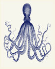 Octopus nautical Sea Life - Vintage Art Print Poster - A1 A2 A3 A4 A5