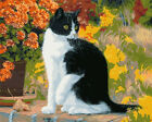Animals DIY Oil Painting Kit Paint by Numbers on Canvas Home Decor Wall Artwork