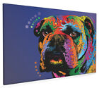 Bulldog Box Canvas and Poster Print (132)
