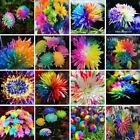 100pcs/bag rainbow daisy seeds chrysanthemum seed bonsai flower beautiful potted