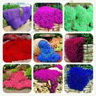 205pcs rare ROCK cress Seeds Climbing plant Creeping Thyme Seed