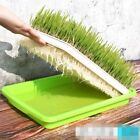 Mini Organic Pet Grass Kit Grow Wheatgrass for Pets Dog Cat Bird Rabbit
