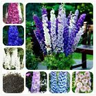 50pcs/bag Delphinium Bonsai Flower seeds Forking decoration Organic Flower 18 Co