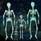 US Halloween Poseable Life Size Skeleton Party Prop Decor Human Anatomy Model