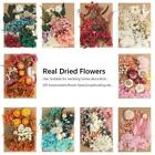 Real Pressed Dried Flowers For Scrapbooking DIY Preserved Flower Decor New