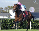 FRANKEL RIDDEN BY TOM QUEALLY 12 (HORSE RACING) PHOTO PRINT