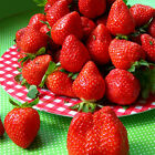 Sweet Nutritious Strawberry Seeds Red Blue Black White Garden Fruit Plant Seeds