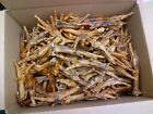 Hollings quality dried chicken feet 50 100 or 200 pieces